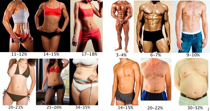 porcentajes grasa corporal